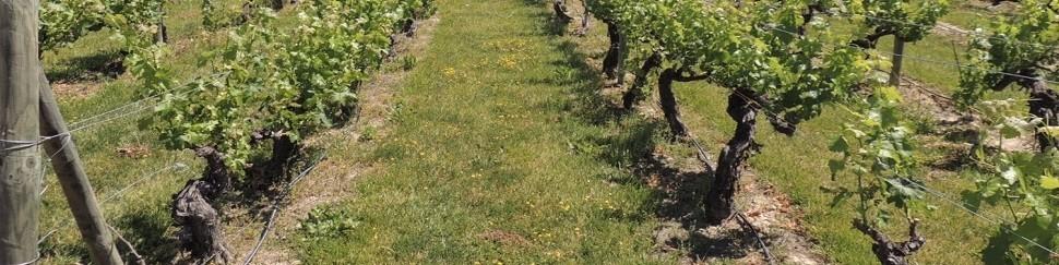 Vinos-riberadelduero | Bodegas Reyes Magos